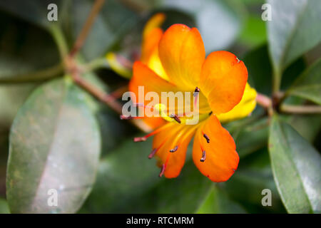 Flowers and tropical rainforest plants outdoor background lives flora travel - Stock Photo