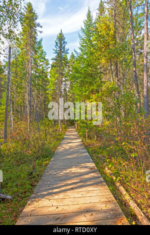 Boardwalk into the Boreal Forest  on the Spruce Bog Trail in Algonquin Provincial Park in Ontario - Stock Photo