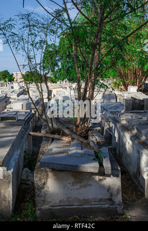 Havana, Cuba - 08 January 2013: The cemetery of Havana in Cuba. A tree grows right through the marble tomb. - Stock Photo