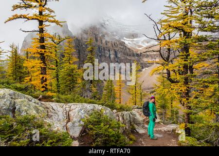 Hiker at the summit of The Beehive, autumn larches, snow-capped mountains in the back, Plain of Six Glaciers, near Lake Louise - Stock Photo