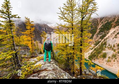 Hiker at the summit of The Beehive, autumnal larches, snow-capped mountains in the back, Lake Agnes, Plain of Six Glaciers on - Stock Photo