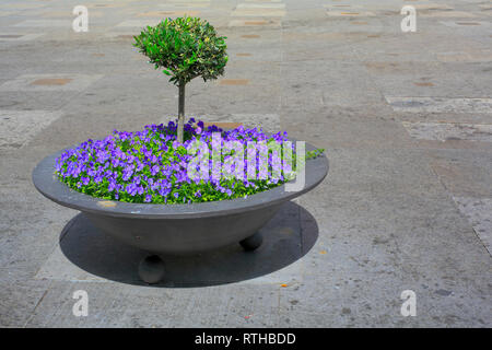 Flowerbed, Jaen, Andalusia, Spain - Stock Photo