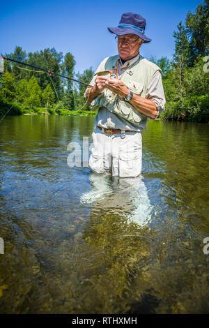 A 70 year old man fly fishing in the Cedar River, Western Washington, USA. - Stock Photo