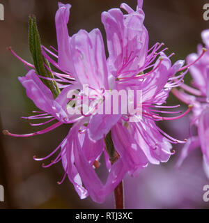 early summer flower - Stock Photo