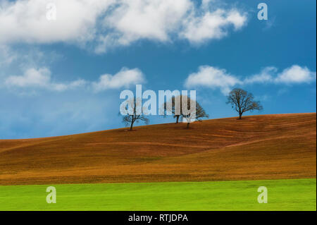 Minimalist landscape of trees on hillside under cloudy skies. - Stock Photo
