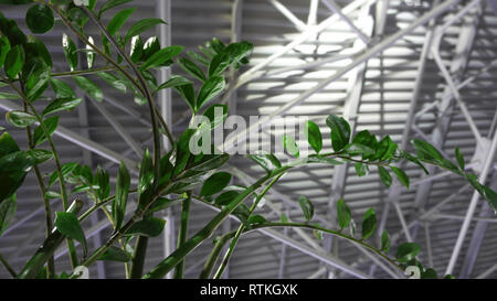 Green plant and metal roof - architecture inside contemporary business hallway. empty interior background. spring background - Stock Photo
