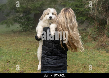 Issaquah, Washington, USA.  Woman holding her ten week old Great Pyrenees puppy.  (PR) - Stock Photo