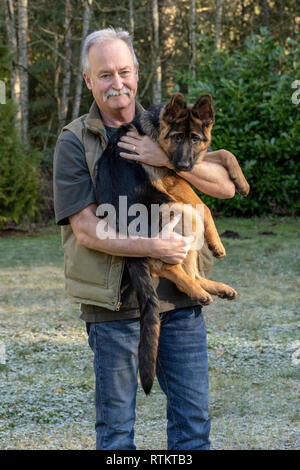 Issaquah, Washington, USA.  Man holding his four month old German Shepherd puppy 'Lander'. - Stock Photo