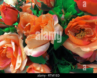 Spring scenes of begonia blooming flowers in the garden, abstract green nature background - Stock Photo