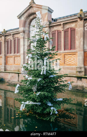 Fir tree in front of the Covered market of Colmar in the middle of the water canal of Colmar, called also Little Venice - Stock Photo