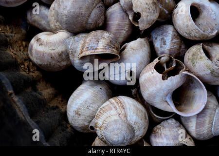 Empty snails shells - Stock Photo