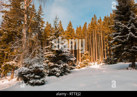 snow covered landscape in forest at Harz Mountains National Park, Germany - Stock Photo