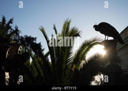 Peacock at Carmen de los Martires Park in Granada, Spain - Stock Photo