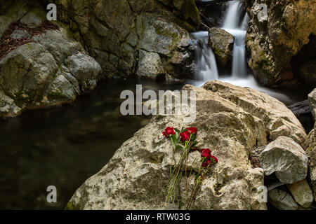 A waterfall in Limekiln State park, Big Sur with red roses in the foreground placed on rock in front of waterfall, long exposure to smooth out the wat - Stock Photo