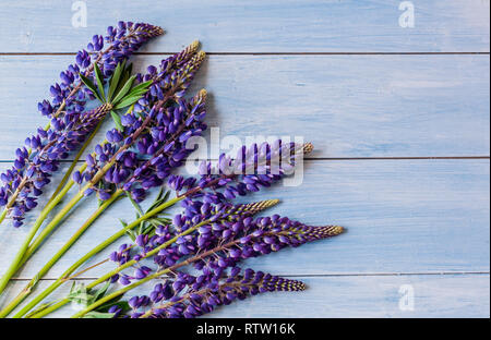 Bouquet of flowers of purple lupins on a blue wooden background summer day indoors - Stock Photo