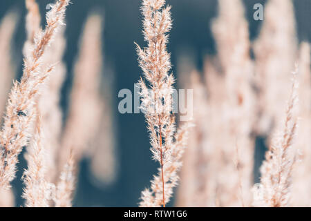 Abstraction of dry grass brown tones texture - Stock Photo