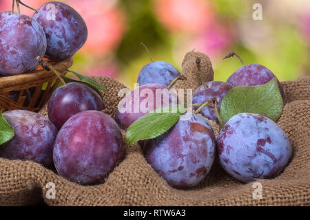 plums in a wicker basket on the sackcloth with blurred background - Stock Photo