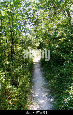 path in the woods on a sunny summer day - Stock Photo