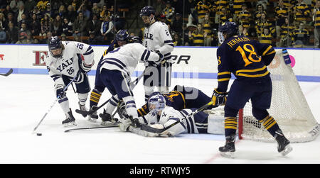 New Haven, CT, USA. 2nd Mar, 2019. March 2, 2019 - New Haven, Connecticut, USA: Yale goaltender SAM TUCKER poke checks the puck away during Quinnipiac's 4-1 win, which clinched the Bobcats regular season championship, and makes them the No. 1 overall seed in the 2019 ECAC Hockey Tournament. Games between the two schools, who are 8 miles from each other in Connecticut, have been a heated rivalry since to two teams played for a national championship in 2013, which was won by Yale 4-0. Stan Godlewski/ZUMA Press Credit: Stan Godlewski/ZUMA Wire/Alamy Live News - Stock Photo