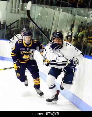 New Haven, CT, USA. 2nd Mar, 2019. March 2, 2019 - New Haven, Connecticut, USA: Quinnipiac #20 CRAIG MARTIN and Yale #11 ANDREW GAUS follow the puck during Quinnipiac's 4-1 win, which clinched the Bobcats regular season championship, and makes them the No. 1 overall seed in the 2019 ECAC Hockey Tournament. Games between the two schools, who are 8 miles from each other in Connecticut, have been a heated rivalry since to two teams played for a national championship in 2013, which was won by Yale 4-0. Stan Godlewski/ZUMA Press Credit: Stan Godlewski/ZUMA Wire/Alamy Live News - Stock Photo
