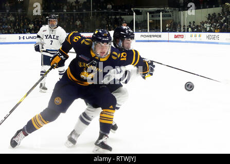 New Haven, CT, USA. 2nd Mar, 2019. March 2, 2019 - New Haven, Connecticut, USA: Quinnipiac #18 NICK JERMAIN and Yale #11 ANFREW GAUS chase the puck into the corner. Quinnipiac's 4-1 win clinched the Bobcats regular season championship, and makes them the No. 1 overall seed in the 2019 ECAC Hockey Tournament. Games between the two schools, who are 8 miles from each other in Connecticut, have been a heated rivalry since to two teams played for a national championship in 2013, which was won by Yale 4-0. Stan Godlewski/ZUMA Press Credit: Stan Godlewski/ZUMA Wire/Alamy Live News - Stock Photo