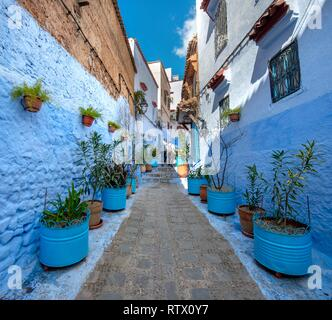 Narrow alley with flower pots, blue houses, medina of Chefchaouen, Chaouen, Tanger-Tétouan, Morocco - Stock Photo
