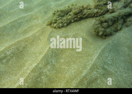 Underwater photo - fine sand sea bottom, with algae covered rocks in background. Abstract marine background. - Stock Photo