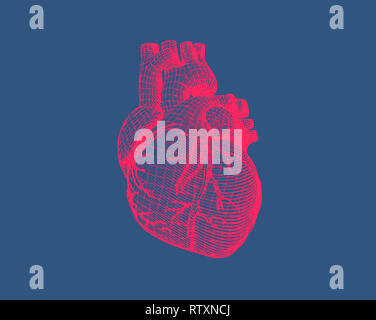 Pink stylized wireframe human heart isolated on dark blue background - Stock Photo