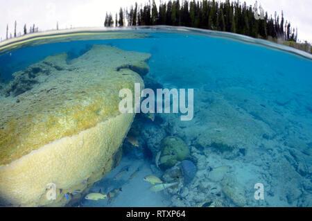 Coral head in La Piscine Naturelle at D'Oro Bay, Ile des Pins, New Caledonia, South Pacific - Stock Photo