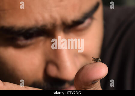 Young man entomologist observing insects in glass vile and trying to identify it for his insect specimen collection during a bright summer. - Stock Photo