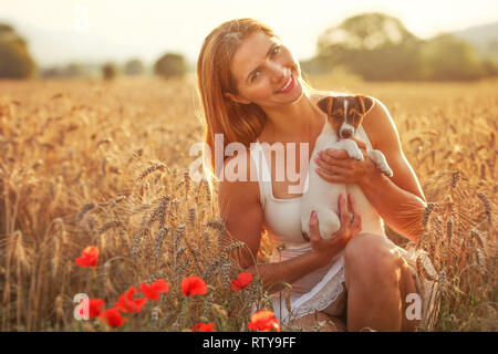 Young woman holds Jack Russell terrier puppy on her hands, red poppies in foreground, sunset lit wheat field behind. - Stock Photo