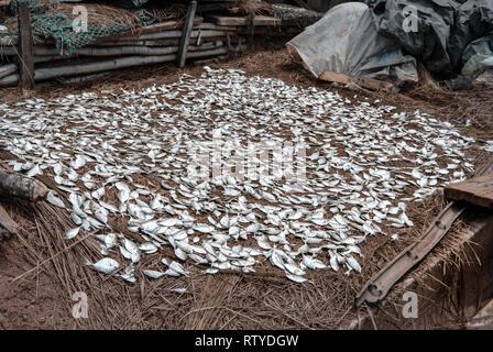 A photo of sun-drying koobi on the ground at the Elmina market in Ghana, West Africa - Stock Photo