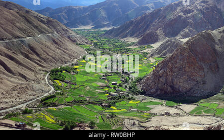 Green fields in a narrow mountain valley, along the slope goes the road to Lake Pangong, Jammu and Kashmir, India. - Stock Photo