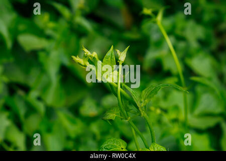 Mosquito on the wild flower - Stock Photo