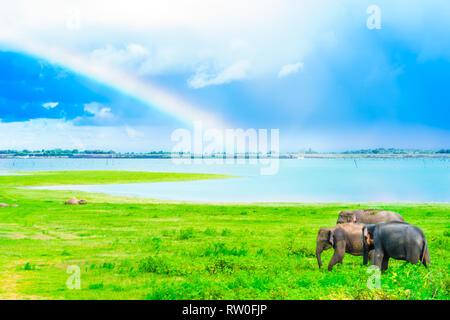 View on elephant in Kaudulla national park, Sri Lanka - Stock Photo