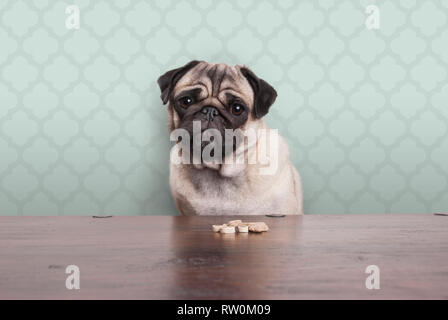 cute pitiful pug puppy dog on a no carbs diet sitting at wooden table with snacks in front, on pastel green background - Stock Photo