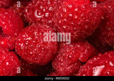 Closeup detail of raspberries wet from drops of water. - Stock Photo