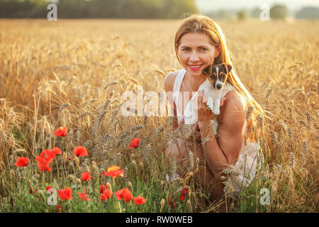 Young woman holding Jack Russell terrier puppy on her hands, sunset lit wheat field in background, some red poppy flowers in front. - Stock Photo