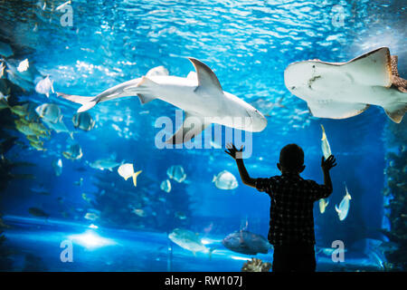 Little boy watching fishes in aquarium - Stock Photo