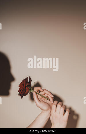 partial view of woman holding red rose flower on beige background - Stock Photo