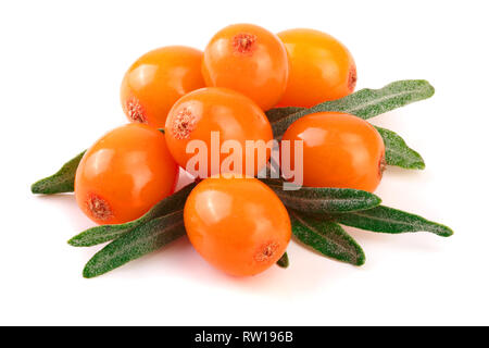 Sea buckthorn. Fresh ripe berry with leaves isolated on white background macro. - Stock Photo