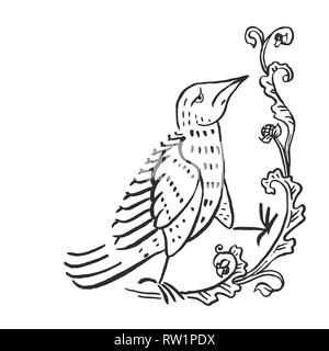 Medieval art pigeon European monks illuminated manuscripts ink drawing vintage floral vignette with bird vector illustration isolated on white - Stock Photo