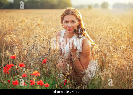 Young athletic woman, kneeling, holding Jack Russell terrier puppy on her hands, some red poppy in foreground and sunset lit wheat field background. - Stock Photo