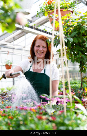Woman watering flowers in a nursery - Greenhouse with coloured plants for sale - Stock Photo