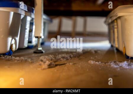 Hausstaub, Wollmäuse, Staubknäule, sammeln sich unter einem Bett, - Stock Photo