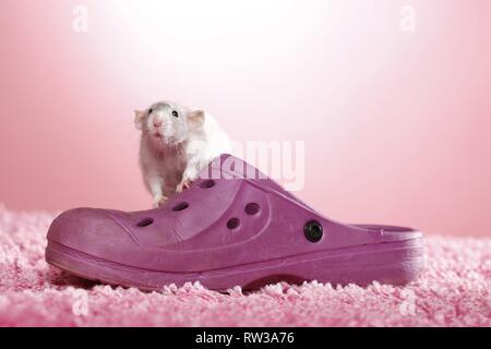 dumbo rat - Stock Photo