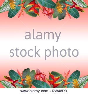 Photo collage of tropical flowers and leaves on gradient coral background - Stock Photo