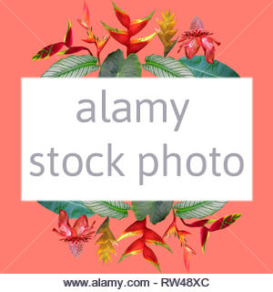 Photo collage of Heliconia and ginger flowers and leaves on coral background with white text field - Stock Photo