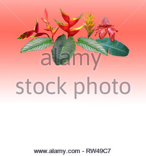 Photo collage of Heliconia and ginger flowers and leaves on gradient coral background - Stock Photo