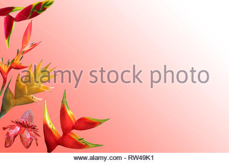 Photo composition of isolated exotic flowers on coral gradient background - Stock Photo